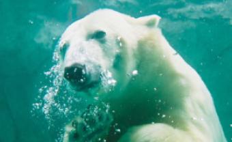 旭山動物園 イメージ1