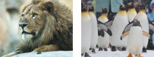旭山動物園 イメージ2